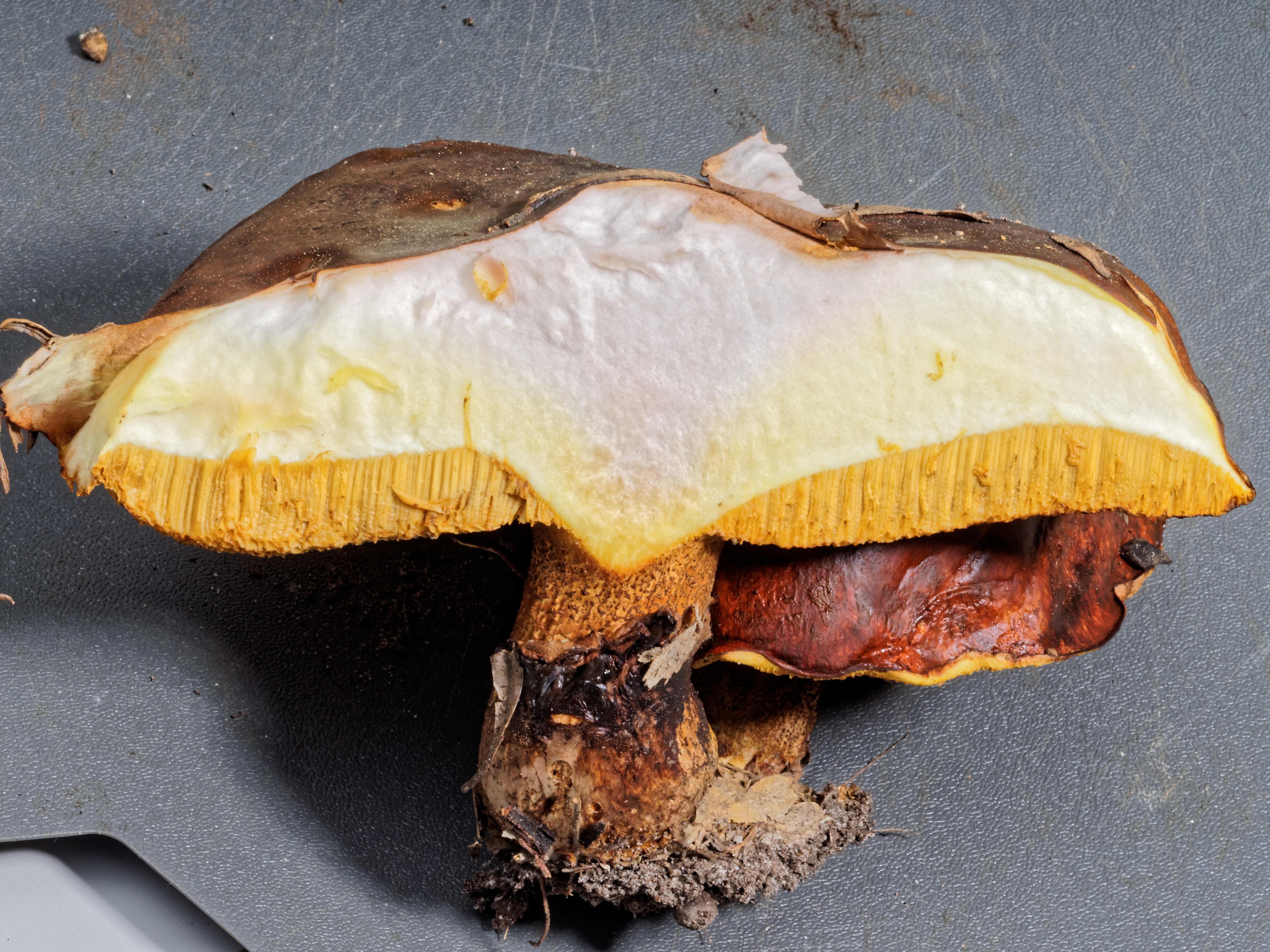 Mushroom-10.jpeg