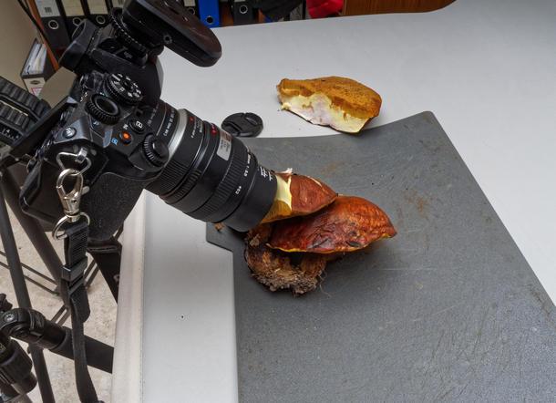 Mushroom-photos-1.jpeg