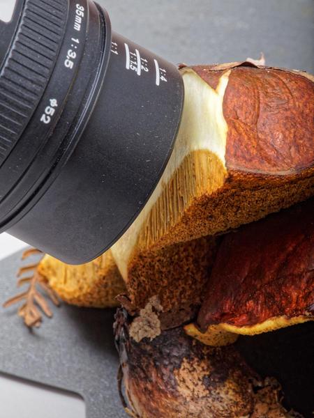 Mushroom-photos-2.jpeg