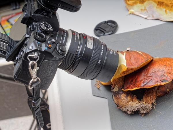 Mushroom-photos-4.jpeg