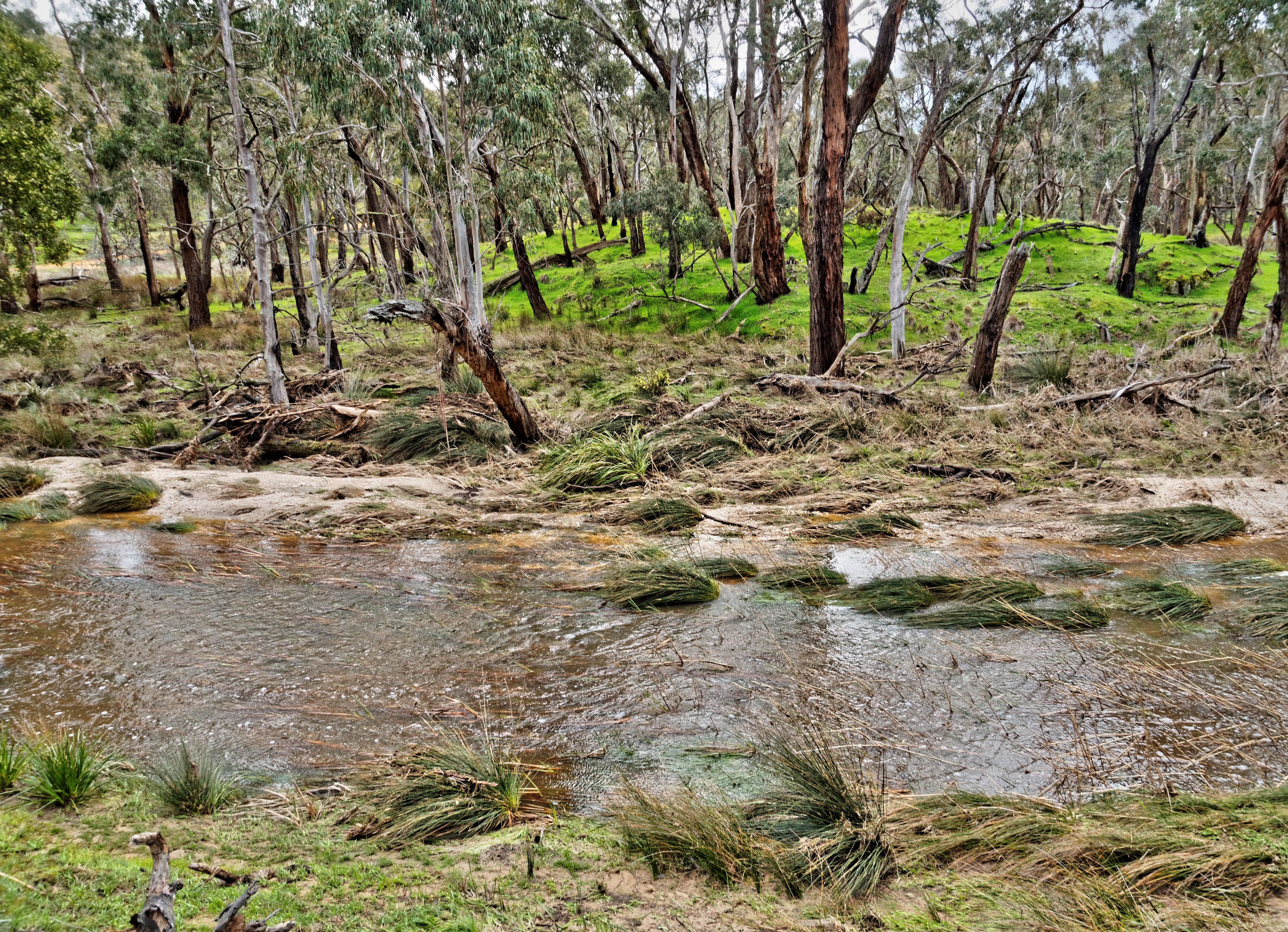 Misery-Creek-10.jpeg