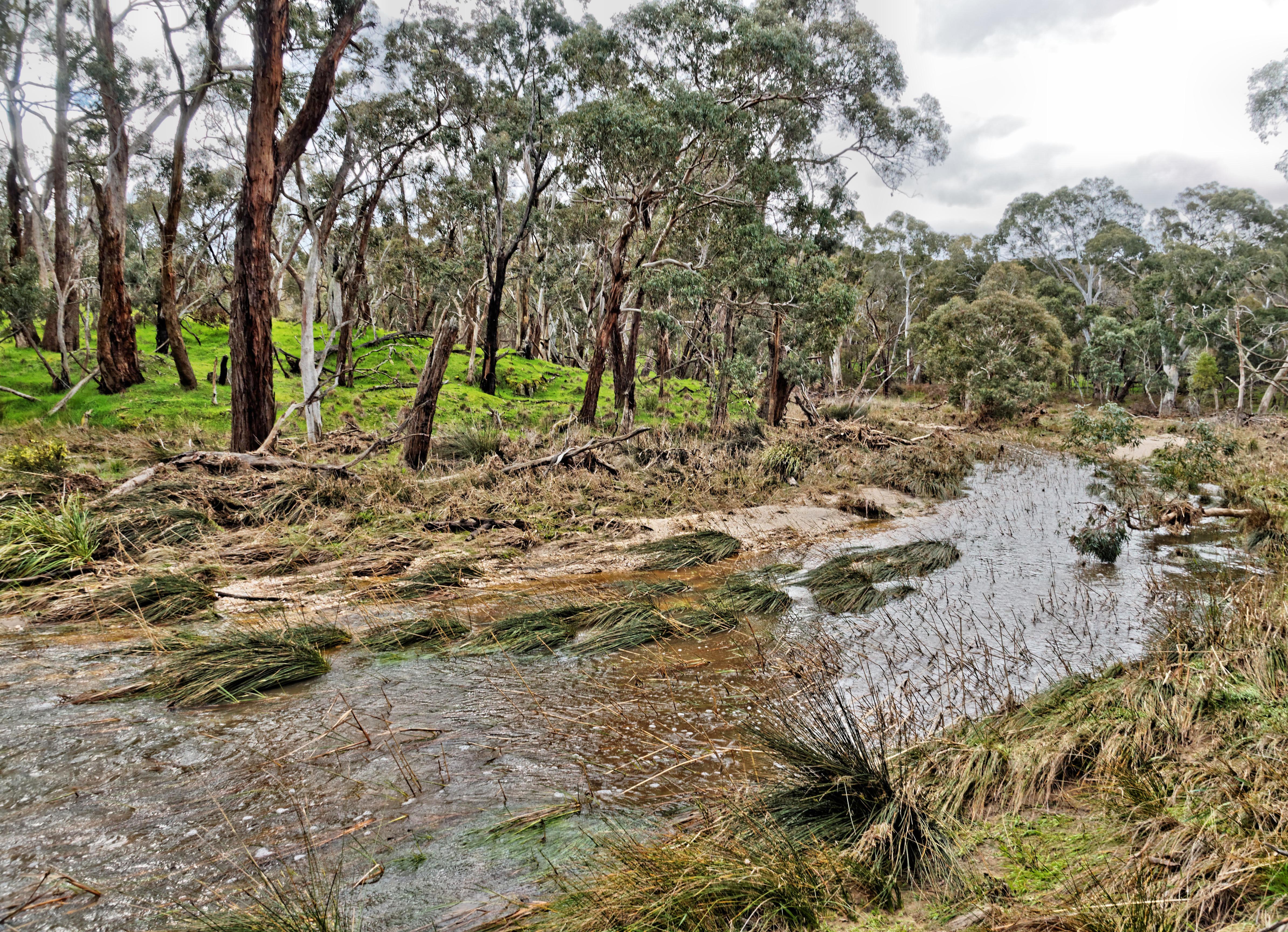 Misery-Creek-4.jpeg