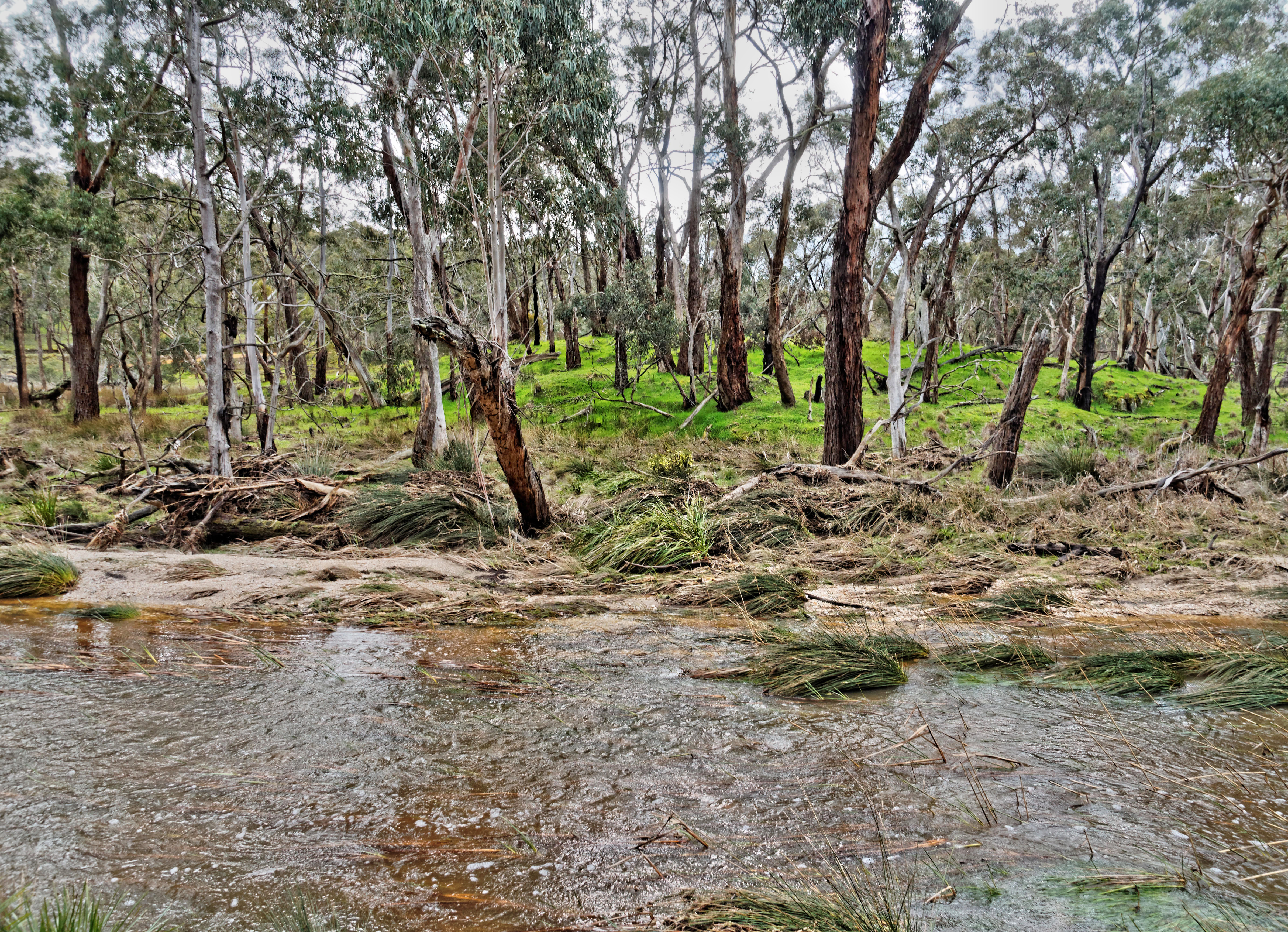 Misery-Creek-5.jpeg