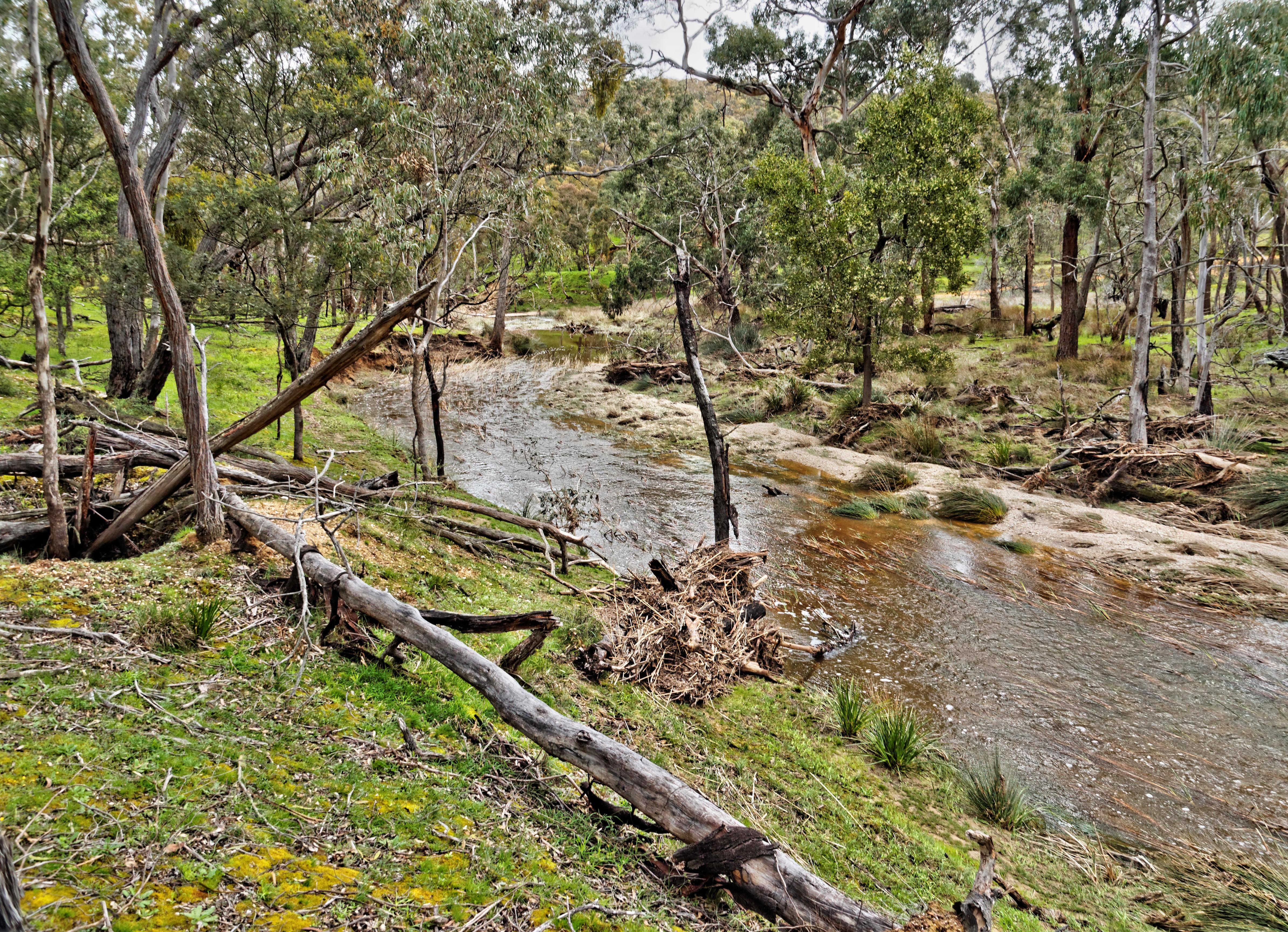 Misery-Creek-9.jpeg