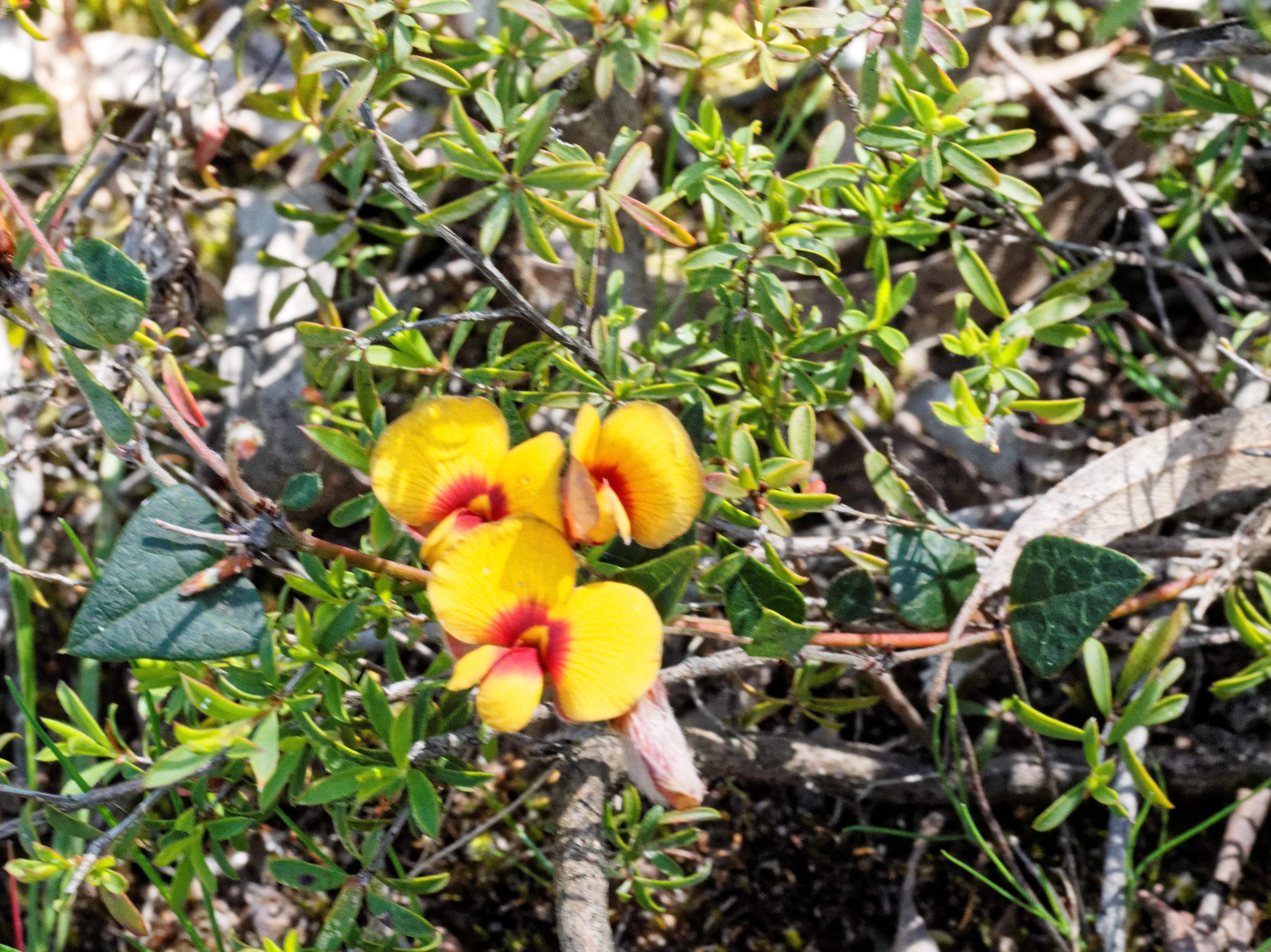 Wildflowers-28.jpeg