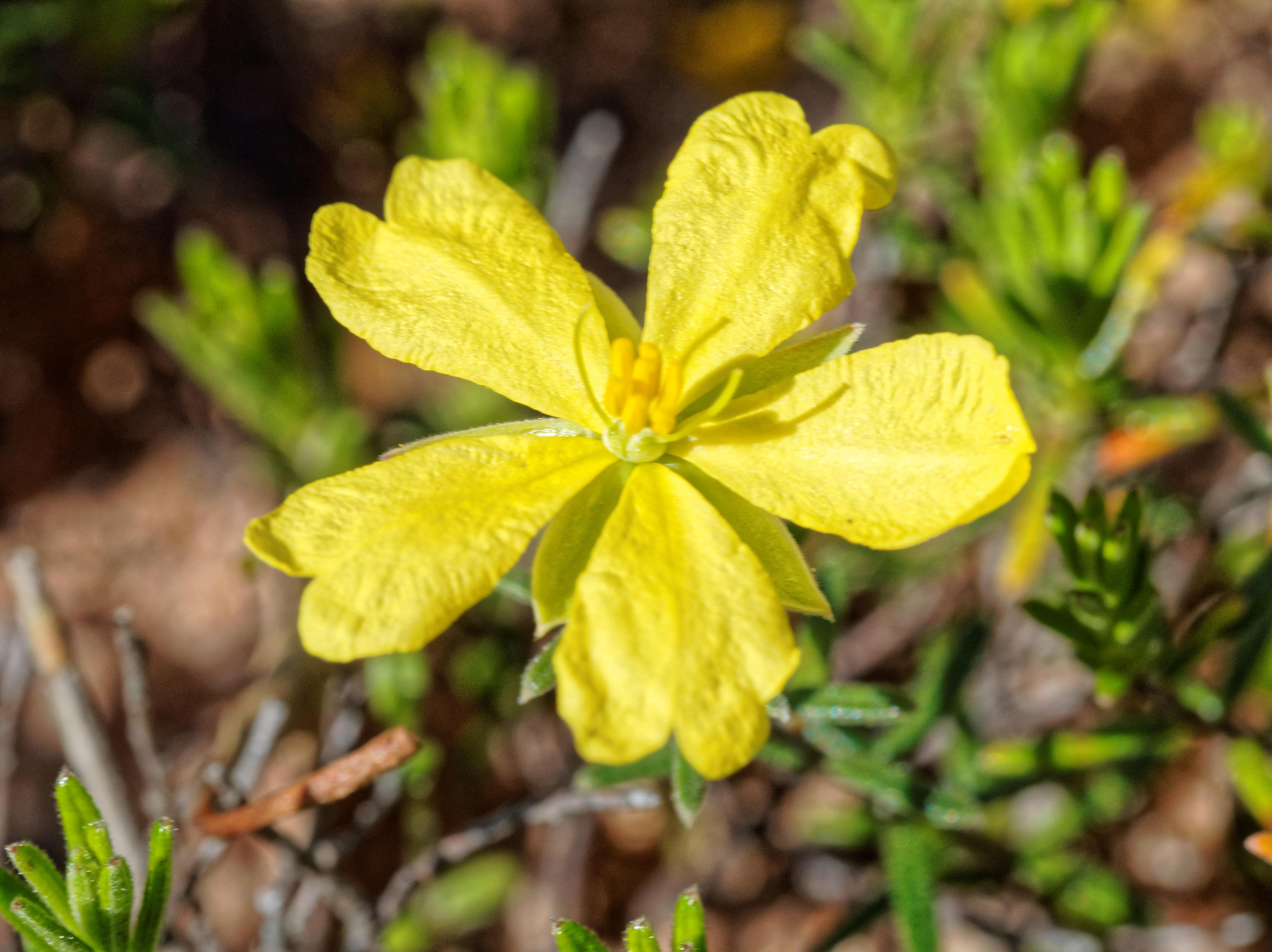 Wildflowers-61.jpeg