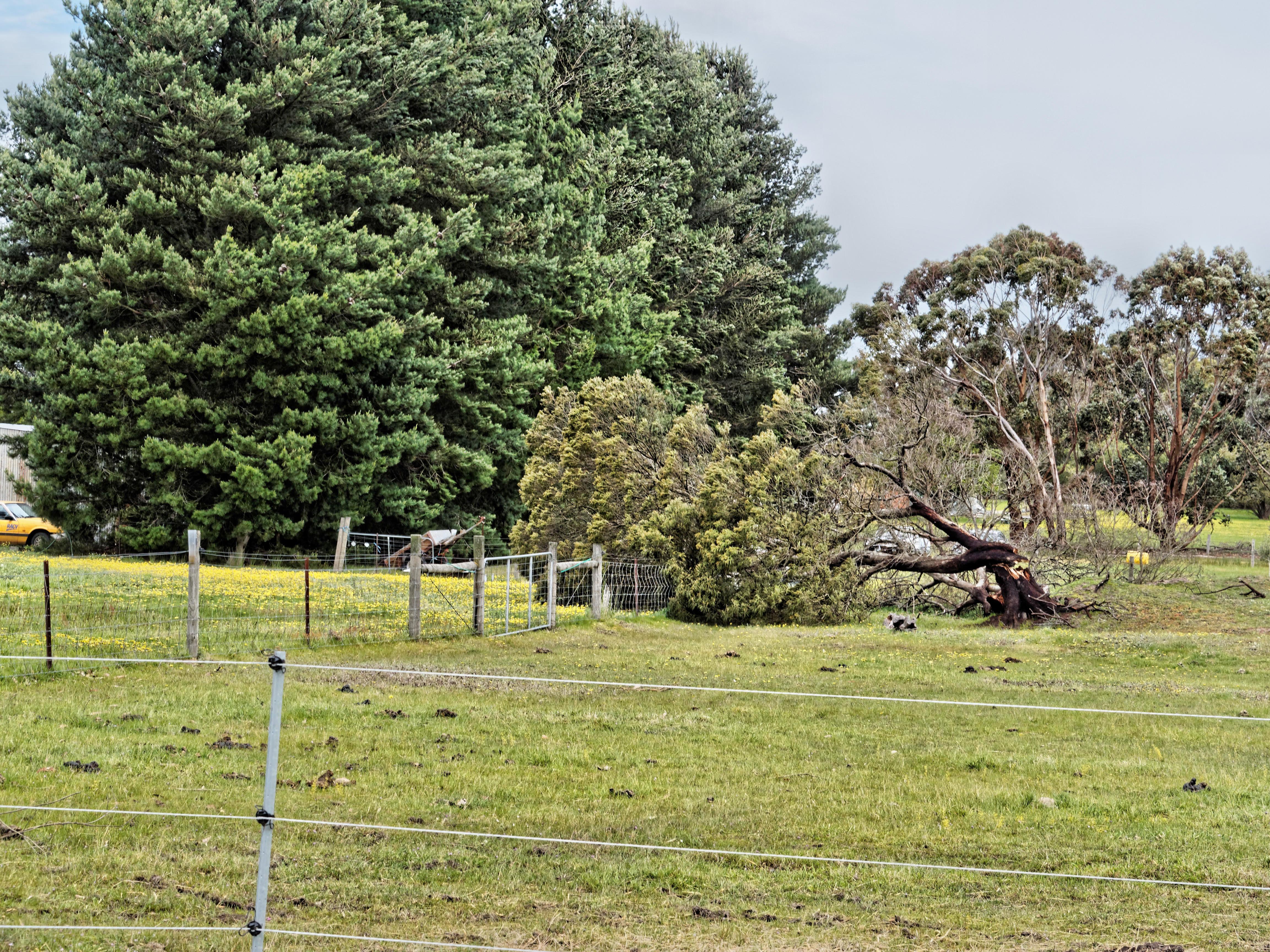 Fallen-tree-1.jpeg