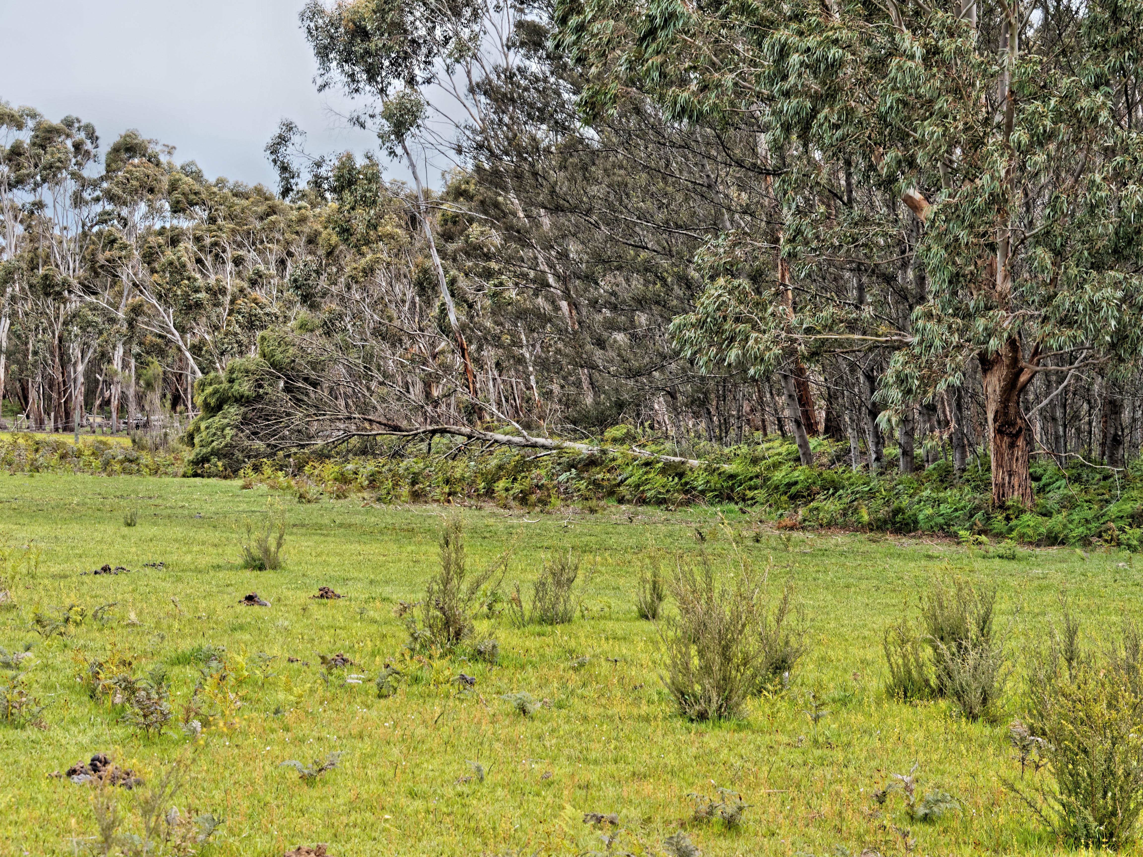 Fallen-tree-2.jpeg