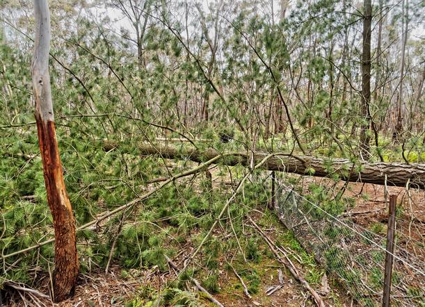 Fallen-tree-6.jpeg