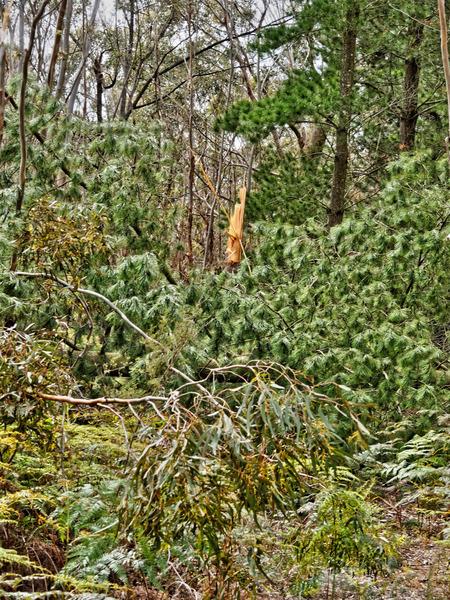 Fallen-tree-7.jpeg