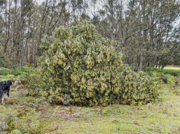 Fallen-tree-8.jpeg