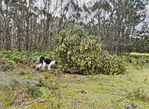 Fallen-tree-9.jpeg