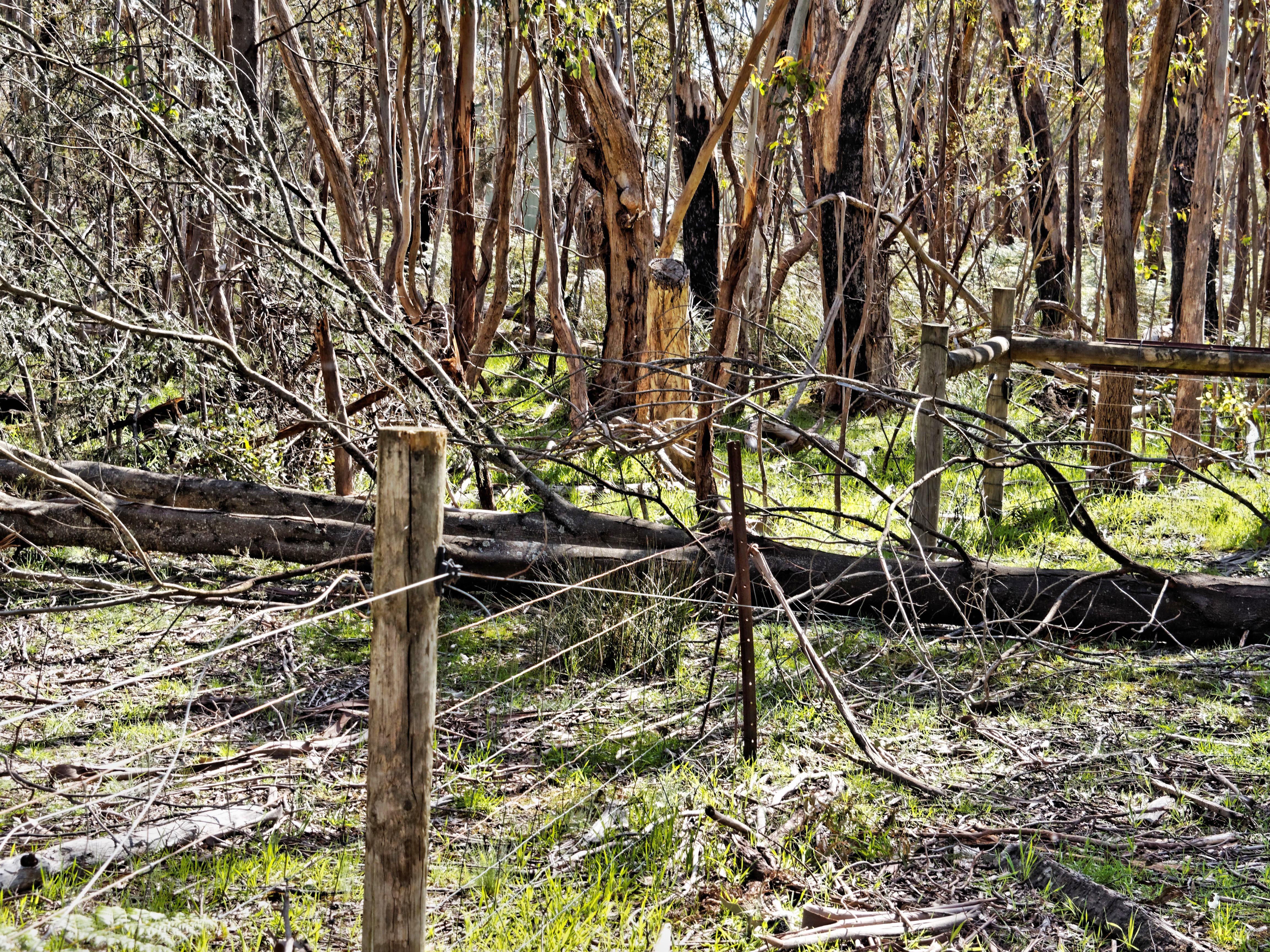 Fallen-trees-2.jpeg
