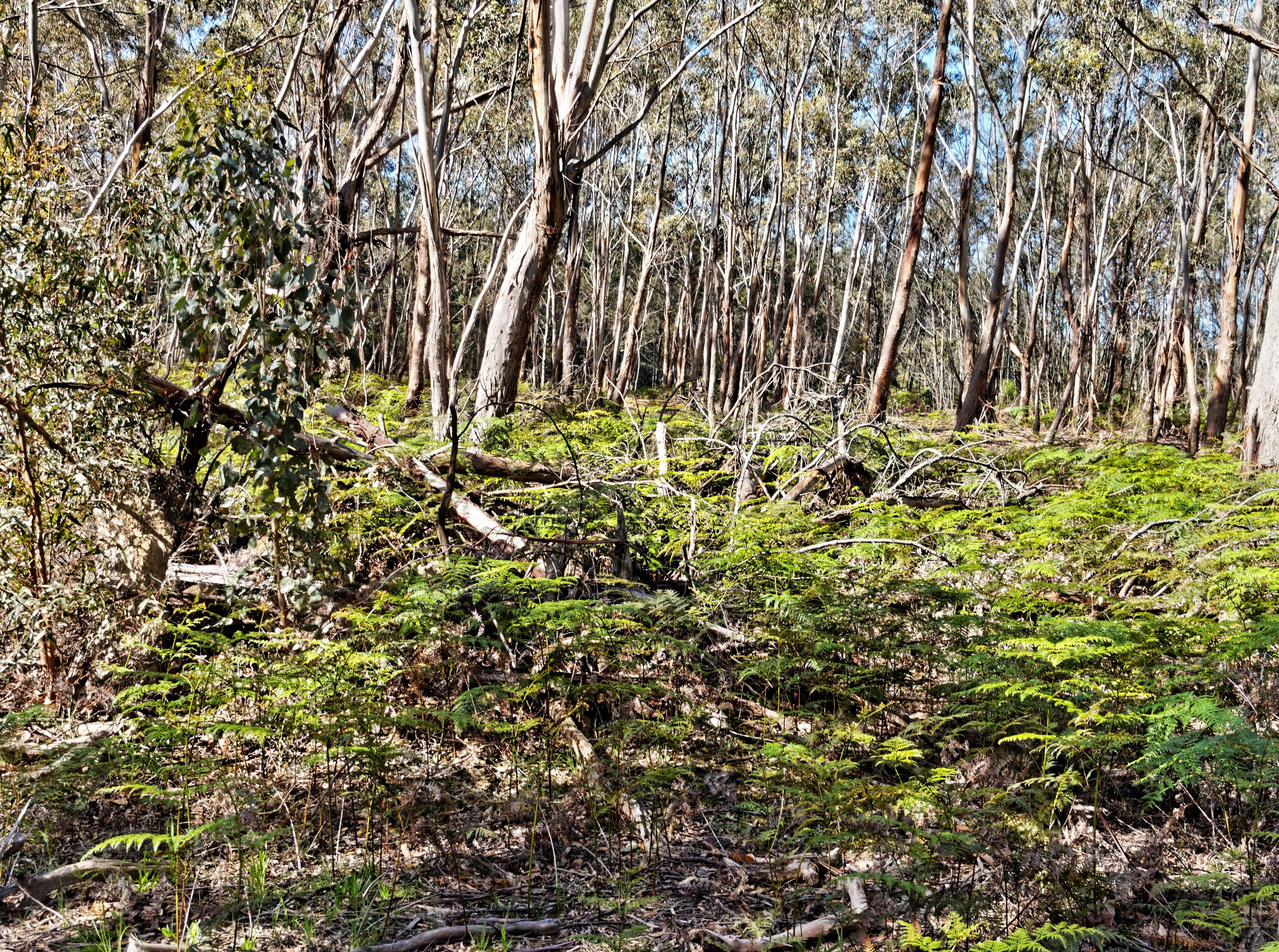 Fallen-trees-3.jpeg
