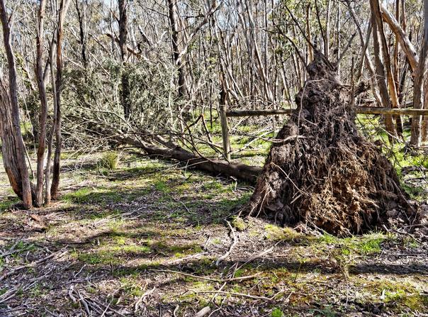 Fallen-trees-1.jpeg