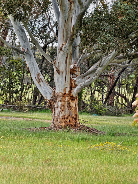 Rani-in-tree.jpeg