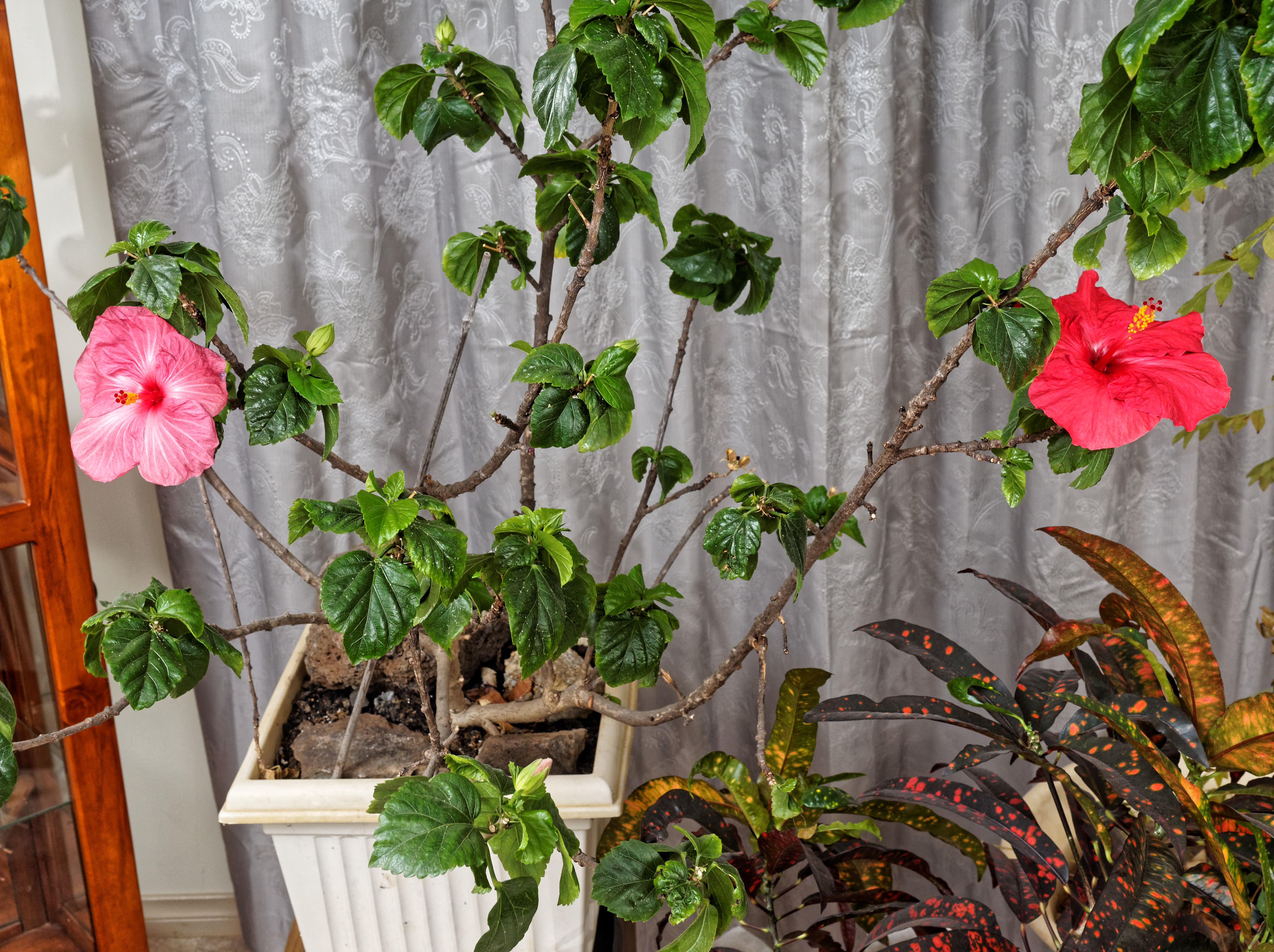 This should be Hibiscus-7.jpeg.  Is it missing?
