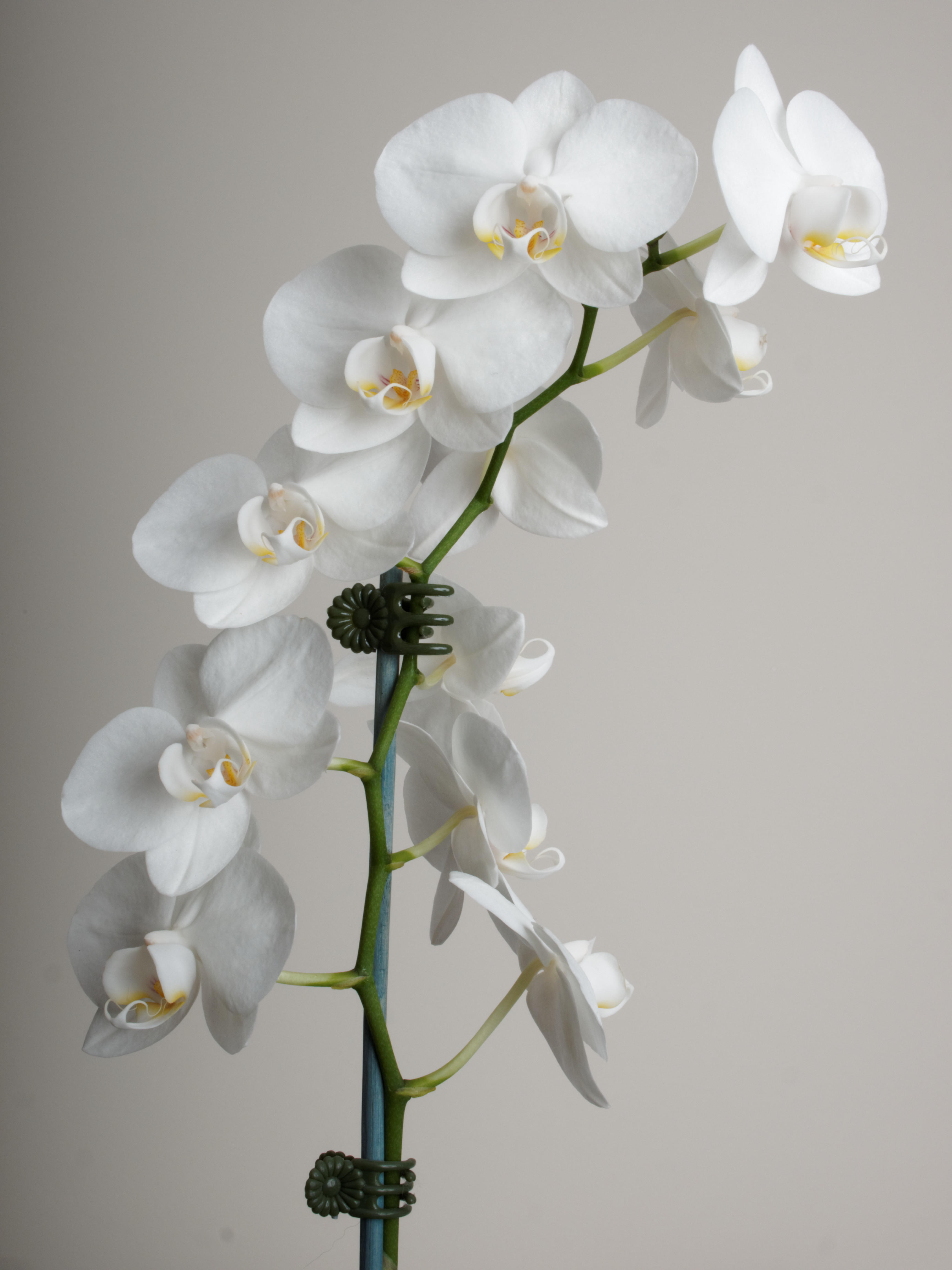 Orchid-3.jpeg