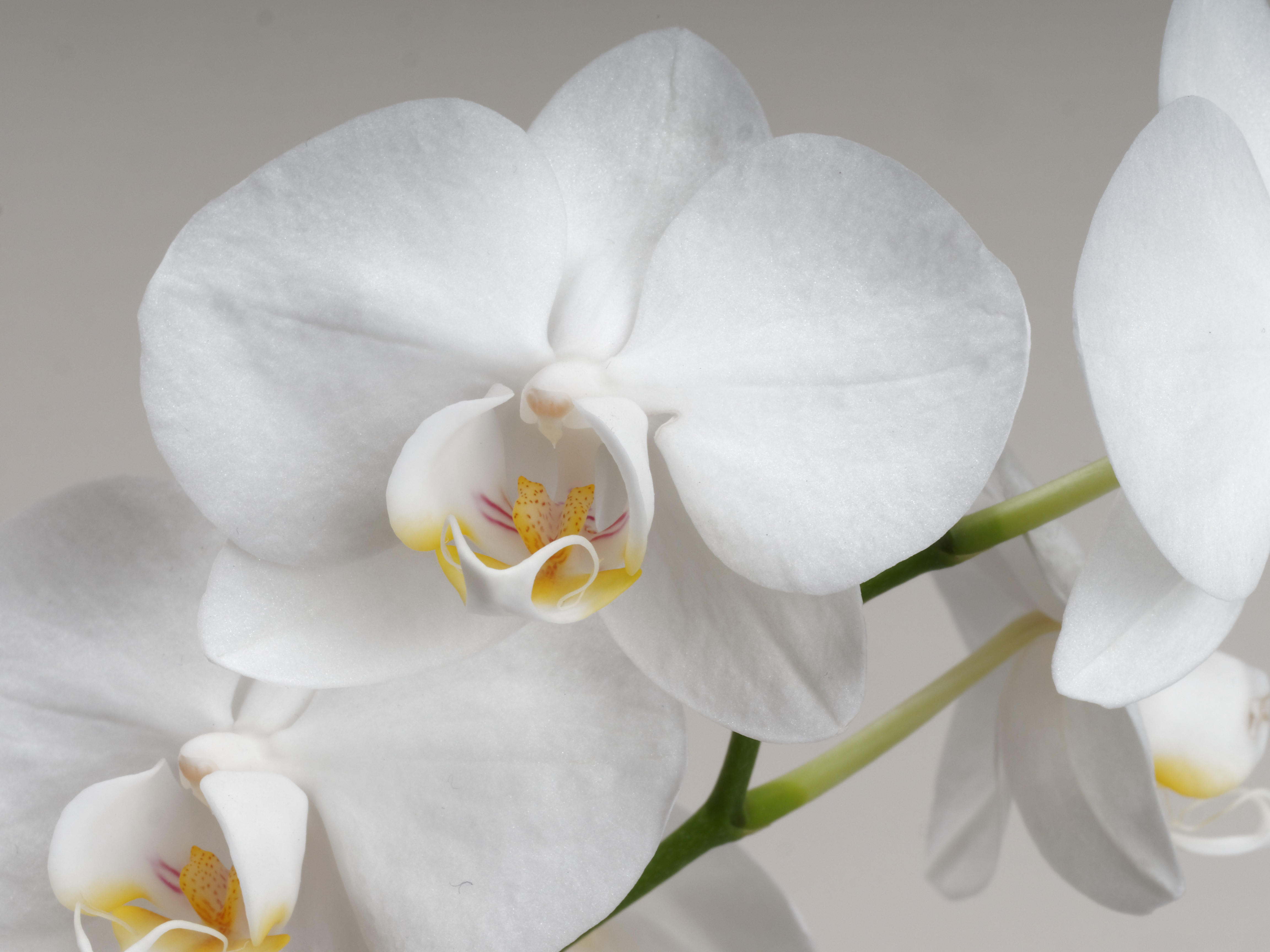 Orchid-6.jpeg