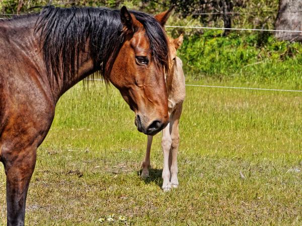 Samba-and-foal-1.jpeg