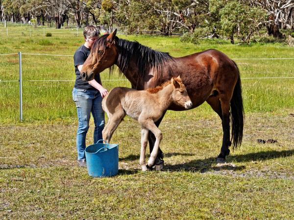 Samba-and-foal-11.jpeg