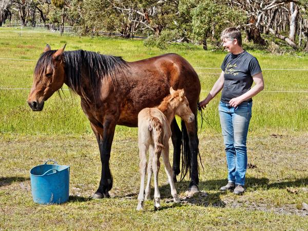 Samba-and-foal-12.jpeg