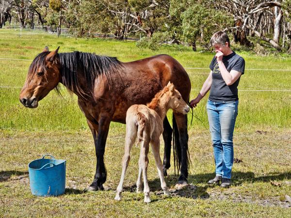 Samba-and-foal-13.jpeg