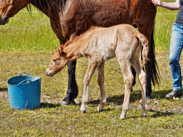 Samba-and-foal-14.jpeg