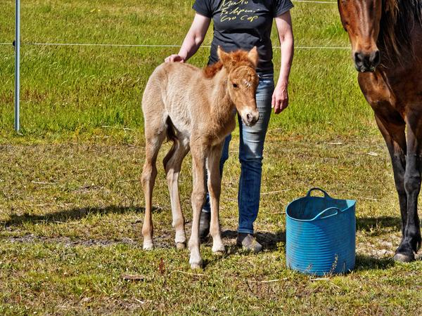Samba-and-foal-19.jpeg