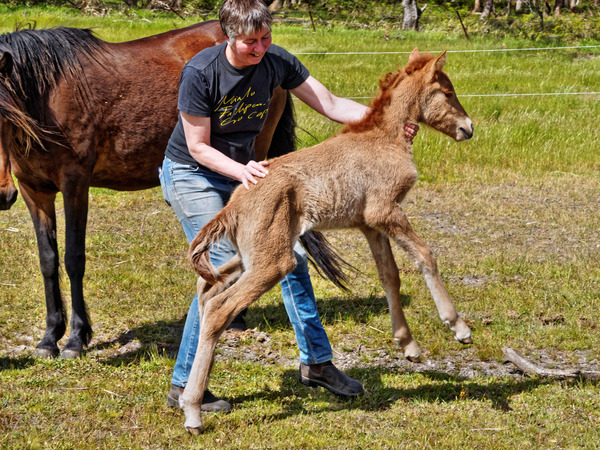 Samba-and-foal-23.jpeg
