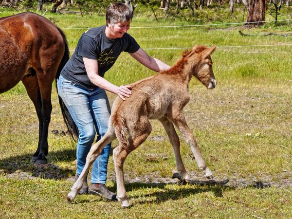 Samba-and-foal-24.jpeg