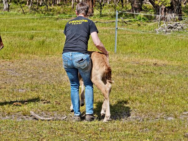 Samba-and-foal-27.jpeg