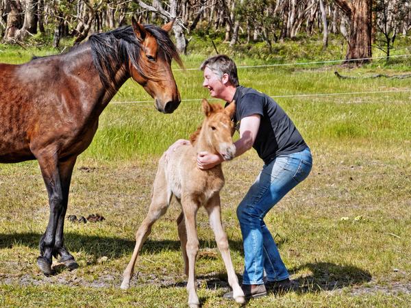 Samba-and-foal-28.jpeg