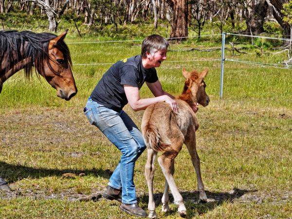 Samba-and-foal-29.jpeg