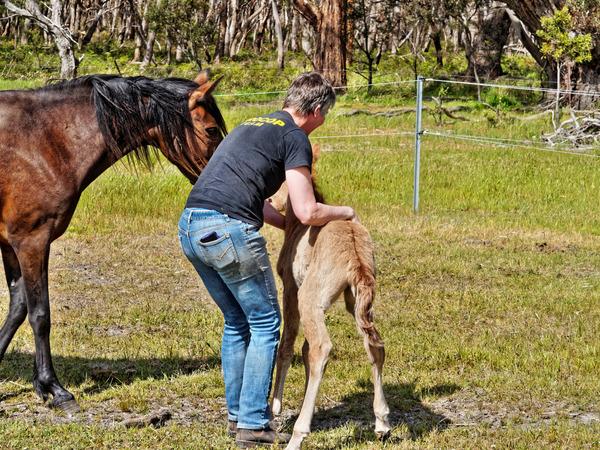 Samba-and-foal-30.jpeg