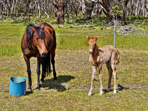 Samba-and-foal-4.jpeg