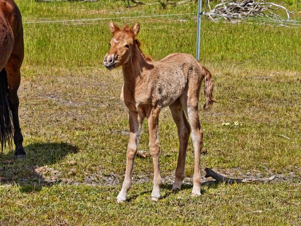 Samba-and-foal-5.jpeg