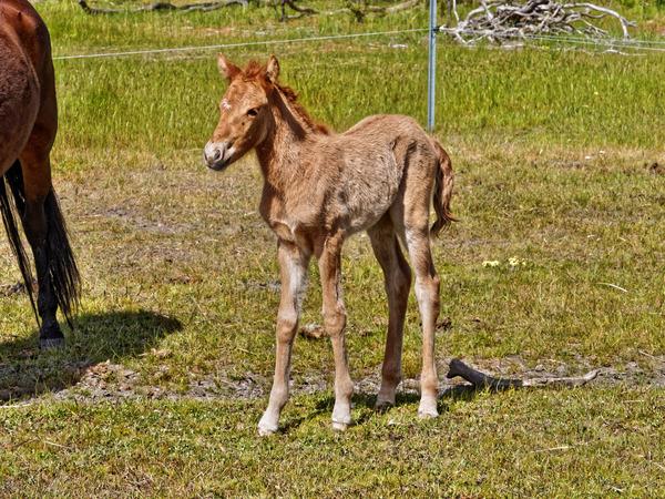 Samba-and-foal-7.jpeg