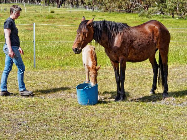 Samba-and-foal-9.jpeg