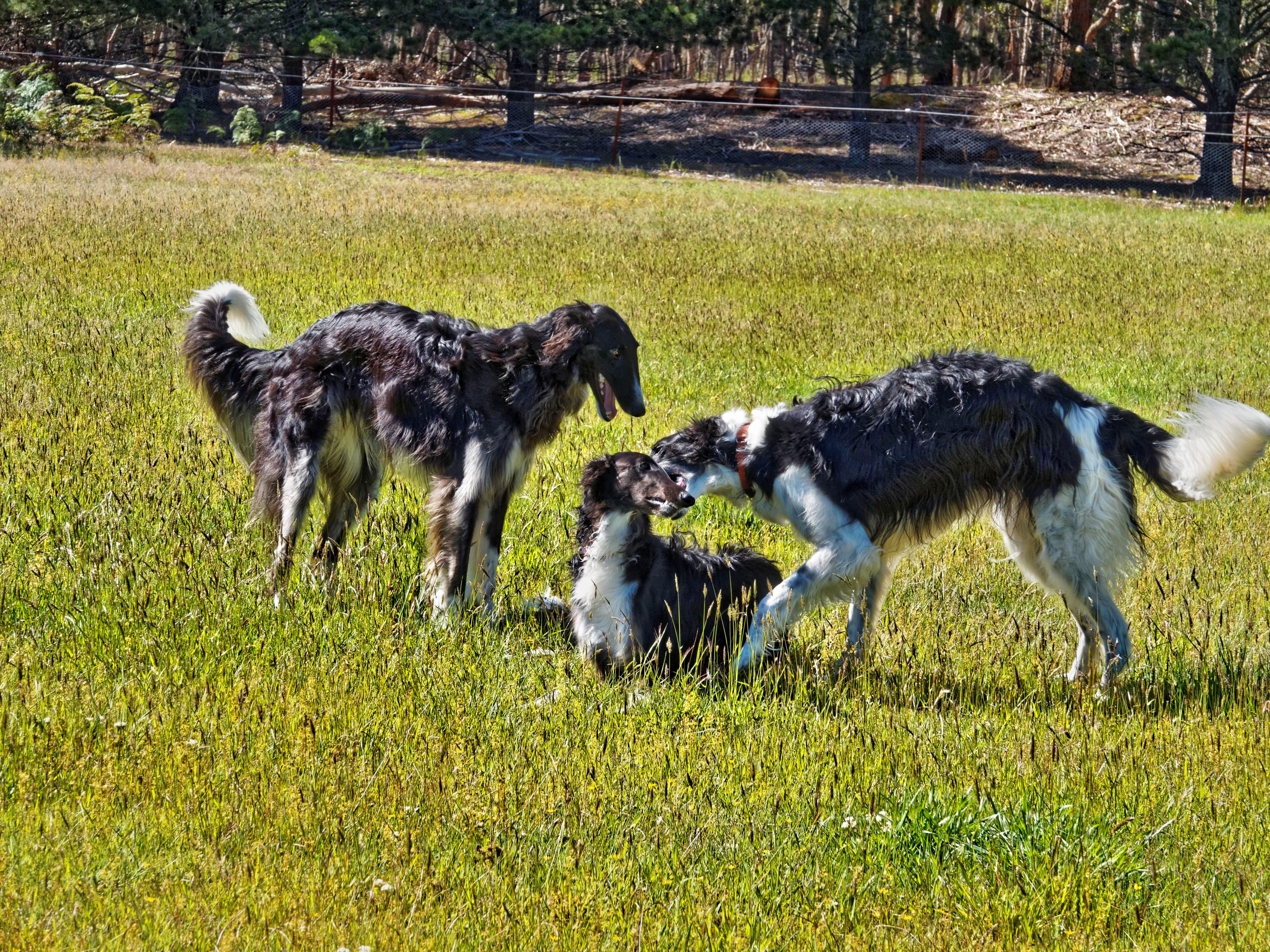 Dogs-6.jpeg