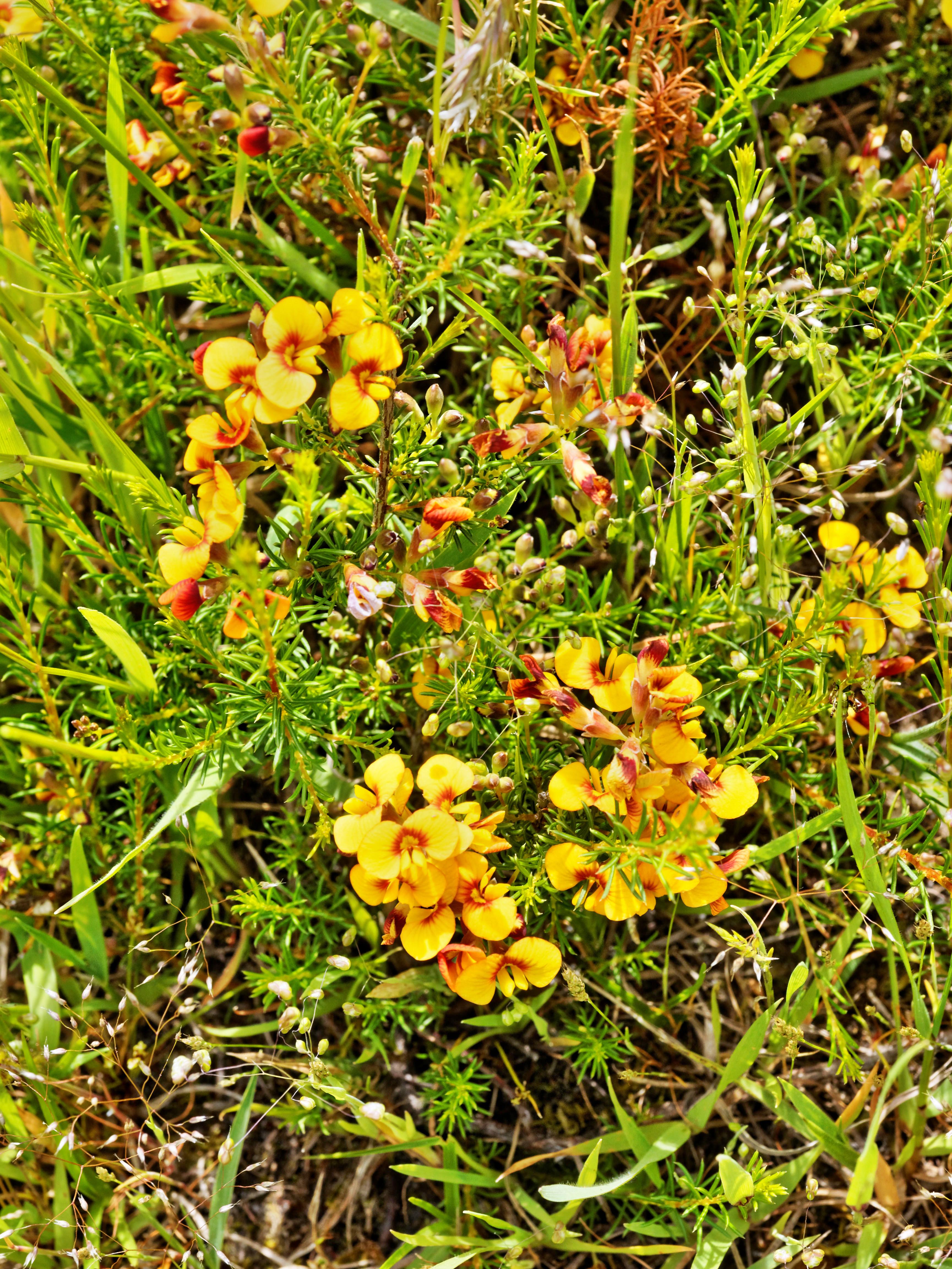 Wildflowers-1.jpeg