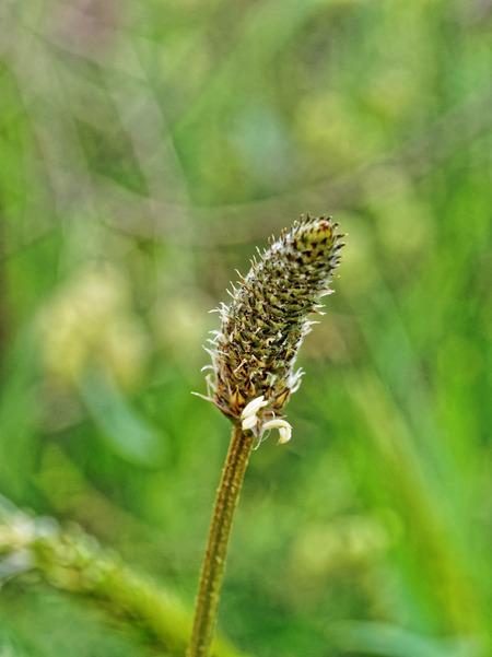 Grass-6.jpeg