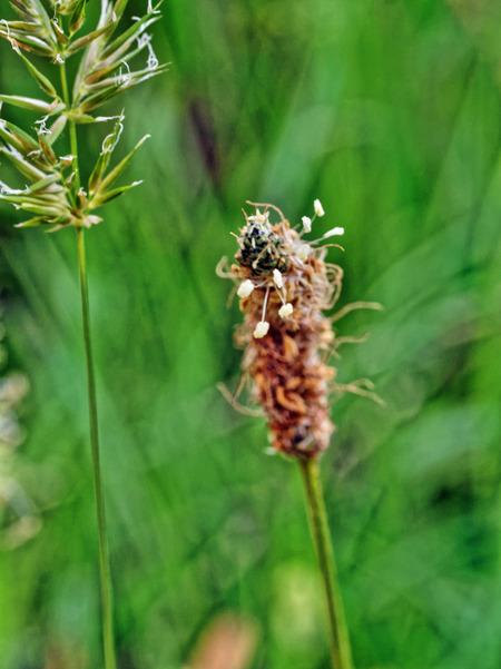 Grass-7.jpeg