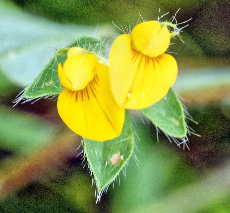 Mystery-flower-1-detail.jpeg