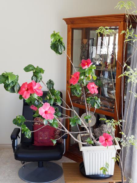 Hibiscus-natural.jpeg