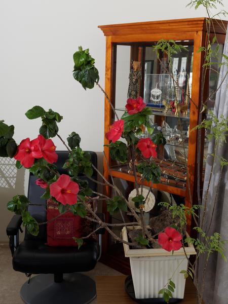 Hibiscus-room-flash-2.jpeg