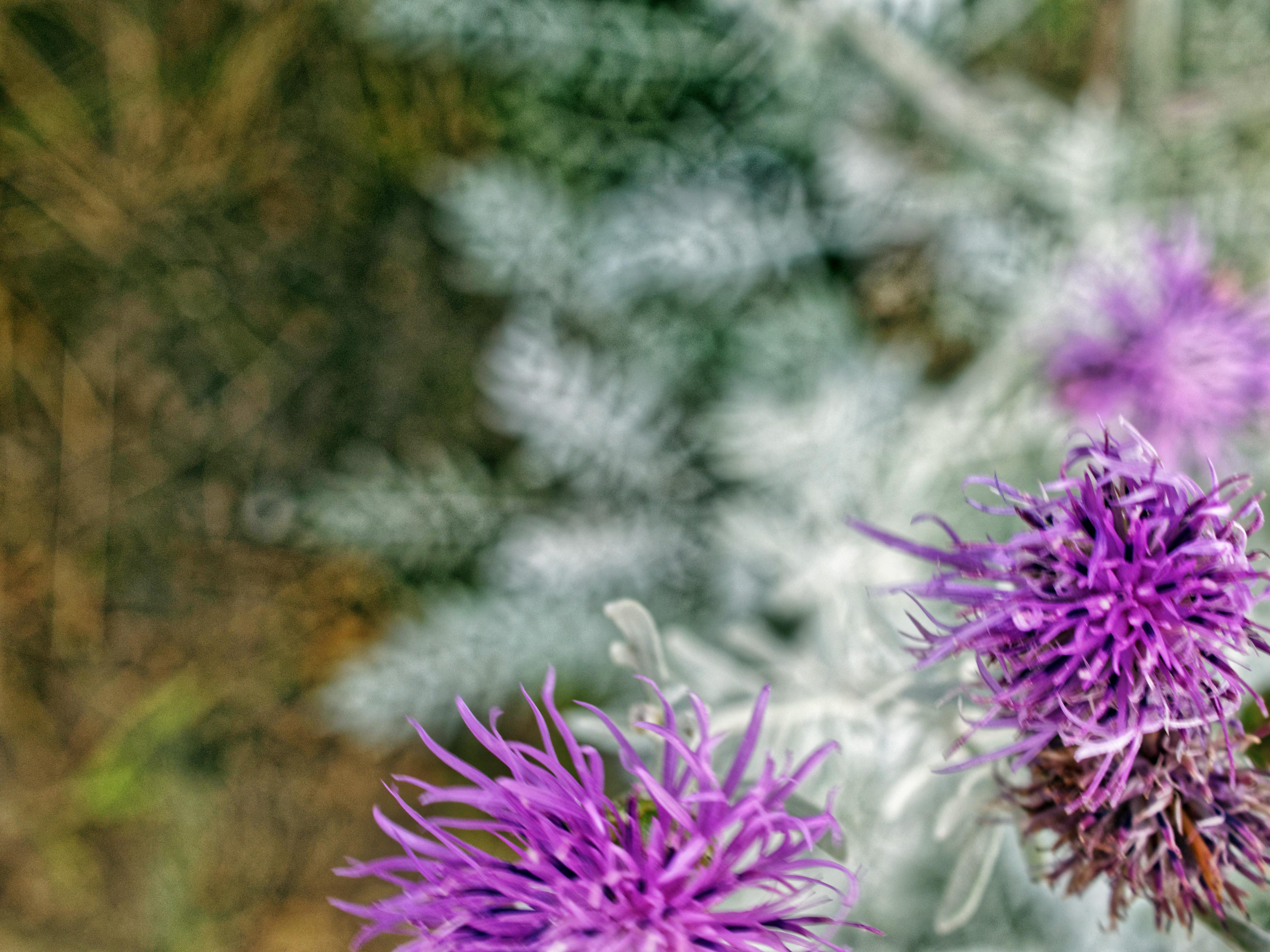 Artemisia-3.jpeg
