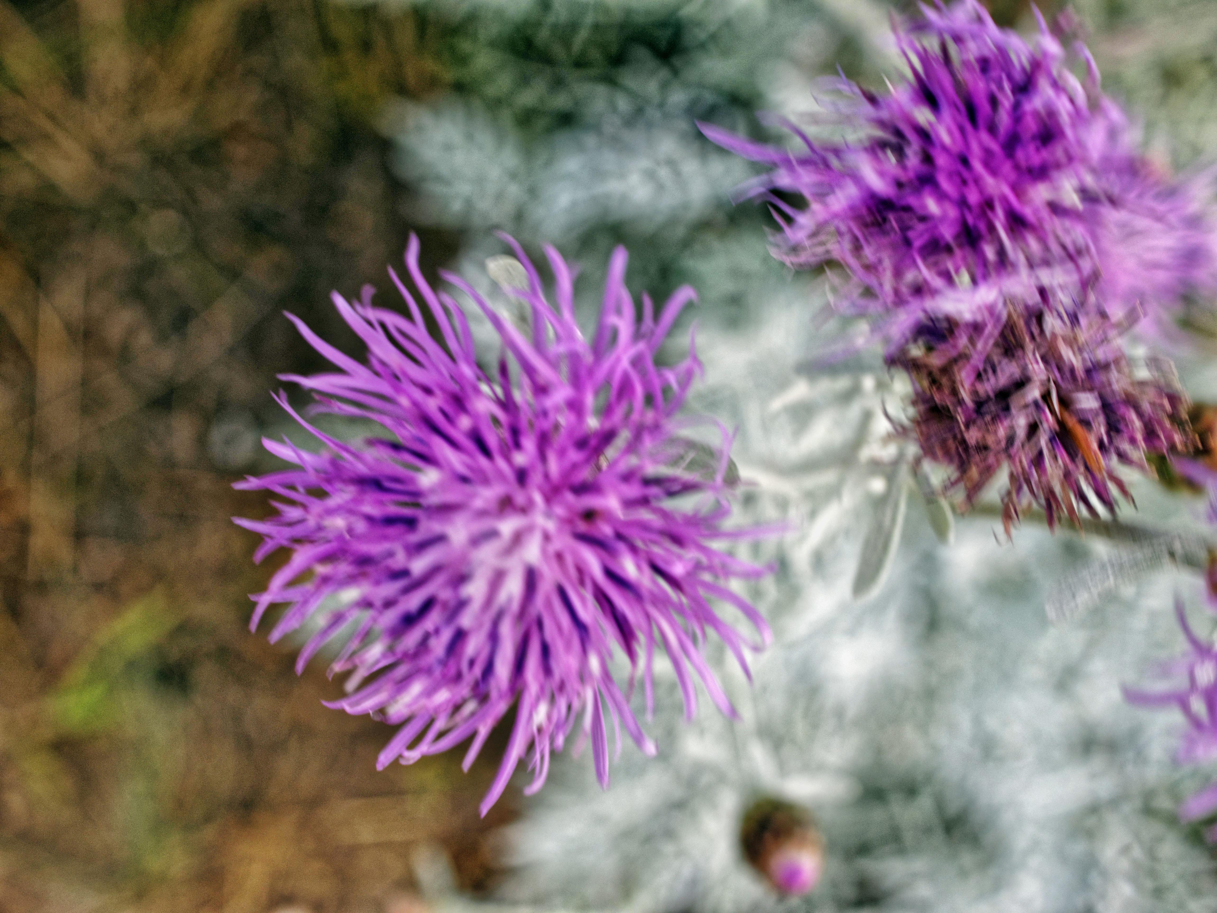 Artemisia-4.jpeg