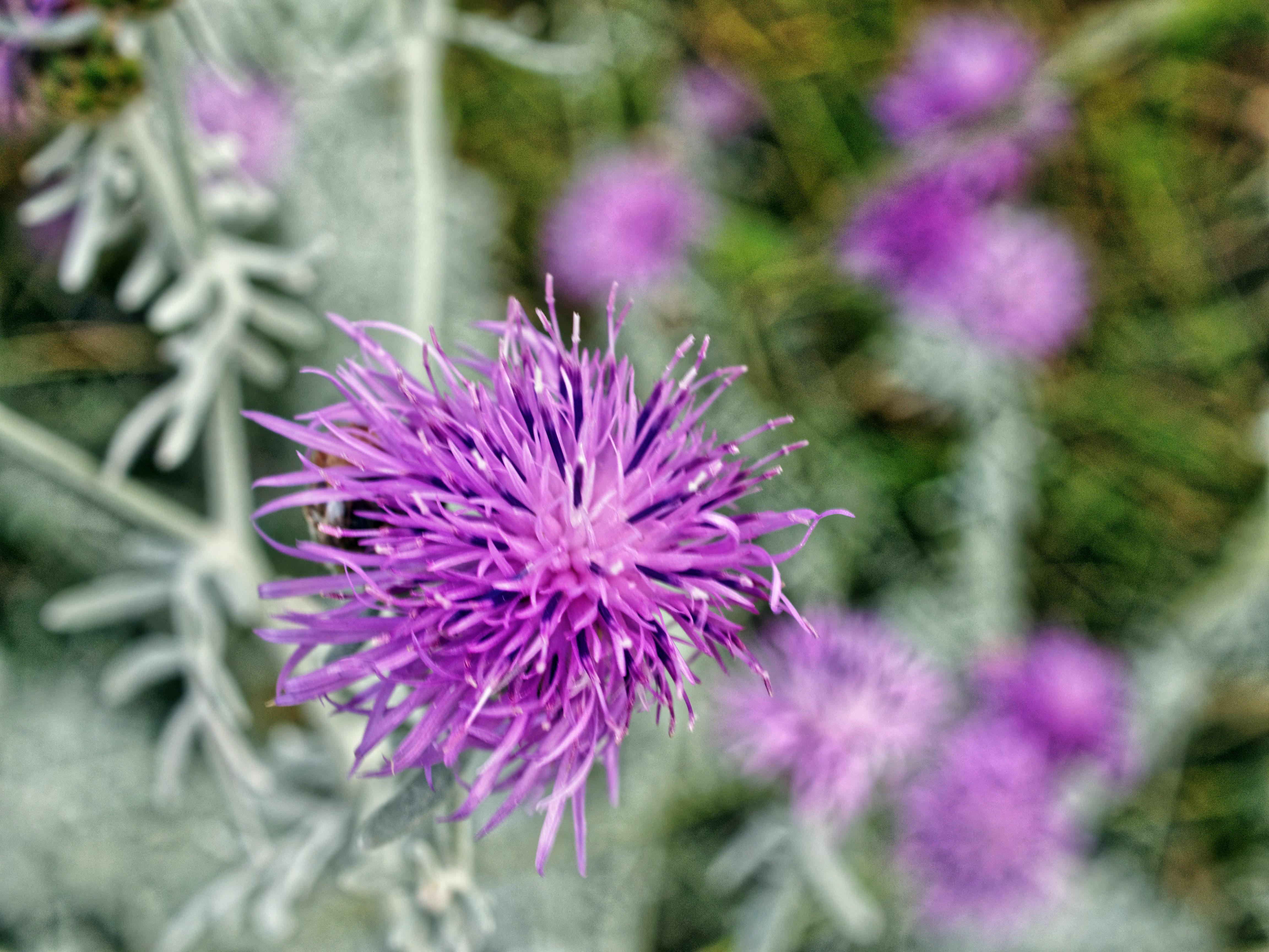 Artemisia-5.jpeg