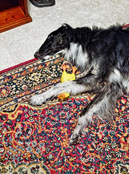 Sasha-with-toy-4.jpeg